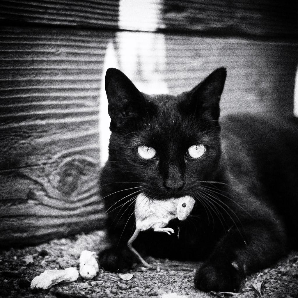 猫好きにおすすめな財布!種類も豊富で可愛い猫がたくさんいますよ!のサムネイル画像