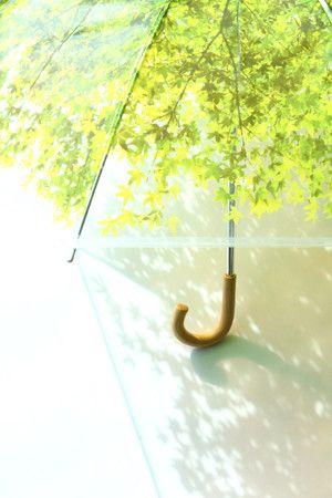 【梅雨を楽しむ】雨が待ち遠しくなる、かわいい折りたたみ傘のサムネイル画像