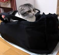 おすすめトラベルアイテム☆かわいい旅行バッグを紹介します☆のサムネイル画像