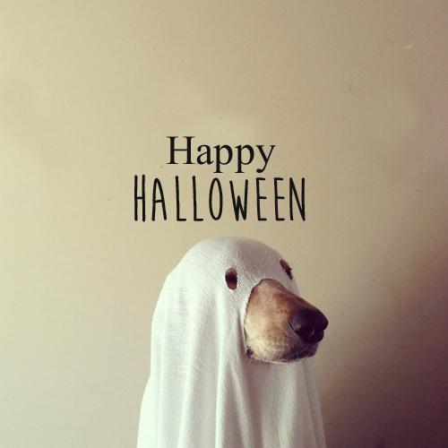 秋の重大イベント♡ハロウィンの服装特集あなたは何に変身しちゃう?のサムネイル画像