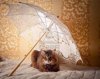 素敵な日傘ブランドを探してみませんか?きっと見つかる素敵な1本のサムネイル画像